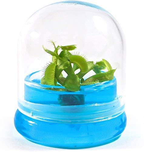 BLOOMIFY Venus Flytrap Terrarium - Zero Care - 100% Growth Guarantee -...