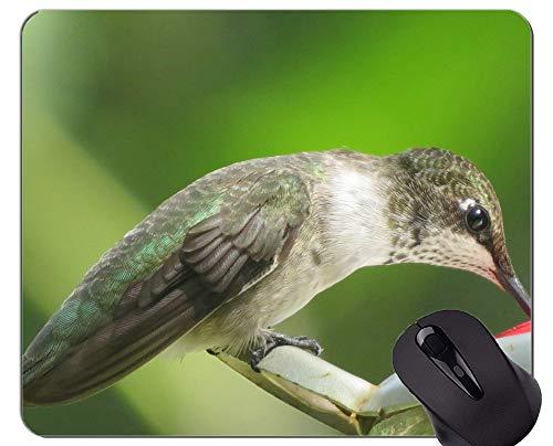 Kundengebundenes Rechteck-nicht Beleg-Gummi Mousepad, grünes weißes Spiel der wild lebenden Tiere des Kolibris Mauspads