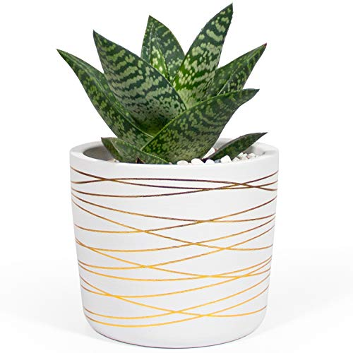 Willowy 6 Inch Ceramic Plant Pot - Small White Planter with Gold...