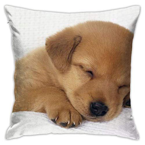 baoan Funda de cojín con diseño de perro con texto en inglés 'Sleephund', 45 x 45 cm
