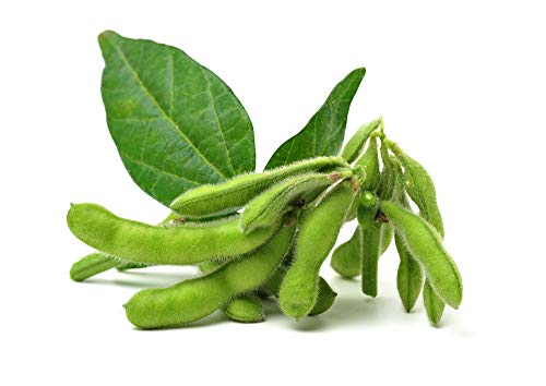 Soybeans Seeds, 25 Heirloom Seeds Per Packet, Non GMO Seeds, Botanical Name:...