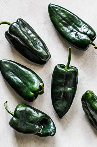 Poblano/Ancho Pepper Seeds - 400 Milligrams-Mildly Hot Livingston