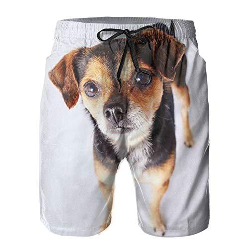 Mayblosom Herren Strand-Shorts Beagle Chihuahua Sommer Badehose Quick Dry Boardshorts...