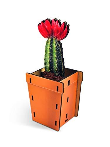 Fred Pop Plants - Cactus - Pencil & Pen Holder