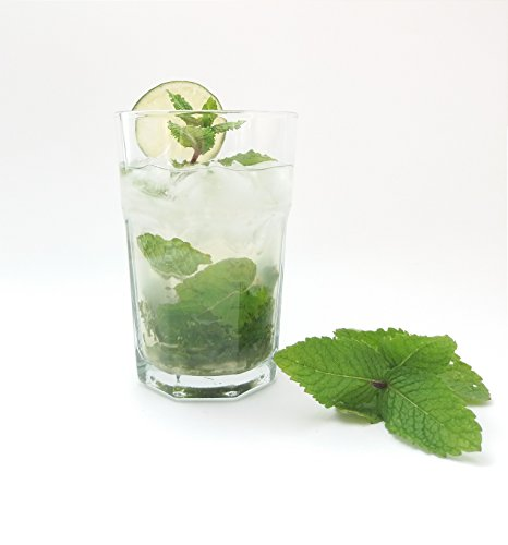 Sables & Reflets Verres à Mojito Barman Professionnels 30 cl (Lot de 6) / Verres Trempé/Cuba Libre/Havana Cocktails