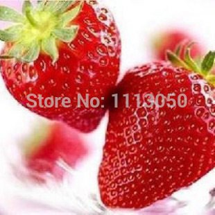 600pcs 24 types fraises semences graines de fruits Blanc Noir Rouge Jaune Bleu Violet de fraise orange rose vert
