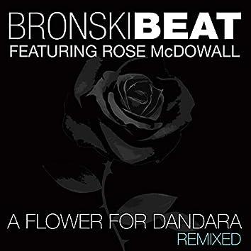 A Flower for Dandara: Remixed