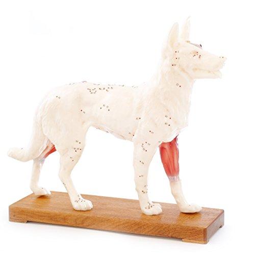 HeineScientific Akupunkturmodell Hund