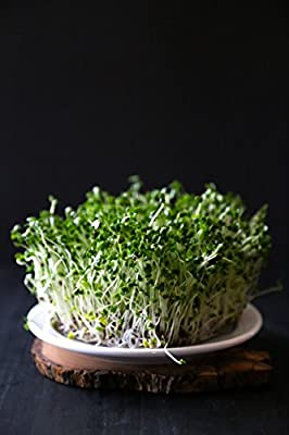 Certified Non-GMO Broccoli Seeds For Sprouting Sprouts Microgreens