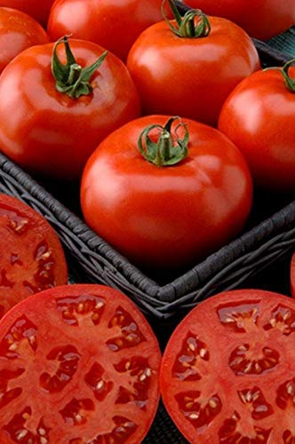 Phoenix Hybrid Tomato Seeds (100 Seeds)