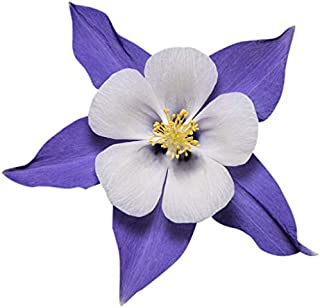 Best types of perennial wildflowers Reviews
