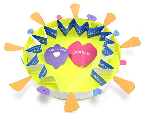 NewPath Learning Coronavirus COVID-19 Structure 3-D Model Kit
