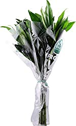 Cut Flowers Mixed Greens 8 Stem Whole Trade Guarantee