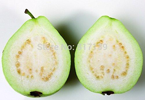 Hausgarten-Anlage 20 Samen brasilianischen Goiaba Guave Weiß Guava Fruchtsamen