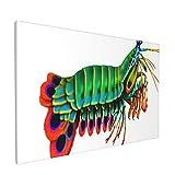 PATINISA Crustáceos Peacock Mantis Camarón Arrecife Acuario Agua salada Estomatópodos Odontodactylus Painting Cuadro sobre Lienzo Canvas Wall Art para Colgar Impresión de la Lona 45x30cm