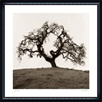 ポスター アラン ブラウステイン Hillside Oak Tree 額装品 ウッドハイグレードフレーム(ネイビー)