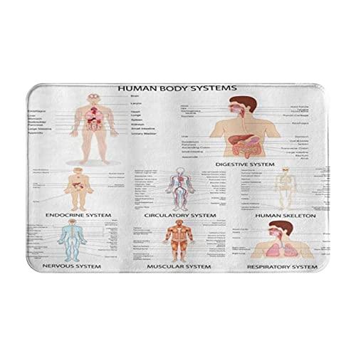 CIKYOWAY Alfombrilla de baño Tabla Completa Diferentes estructuras corporales de órganos Vida Celular, Alfombra de Puerta Alfombra de baño Alfombra de Cocina Alfombra Antideslizante Alfombra de área