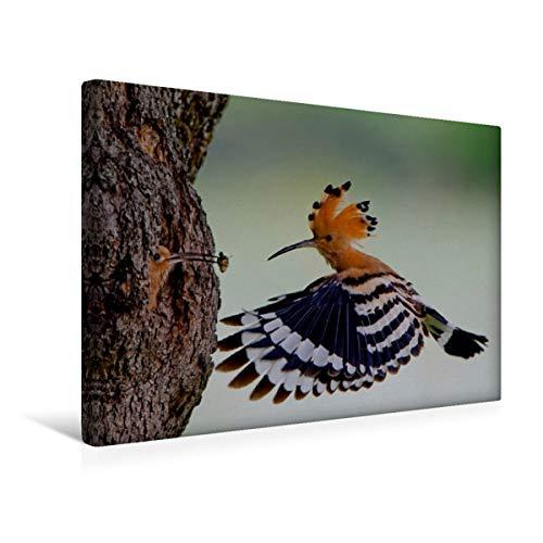 CALVENDO Premium Textil-Leinwand 45 cm x 30 cm quer, EIN Motiv aus dem Kalender Wiedehopf | Wandbild, Bild auf Keilrahmen, Fertigbild auf echter Leinwand, Leinwanddruck Tiere Tiere