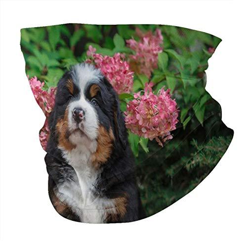 Cachorro mascotas Sin costuras Multifuncional Headwear Variedad Cabeza Bufanda Diseño Personalizado Capucha Deportes al aire libre Diadema