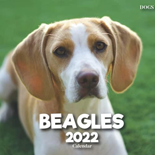 Calendario 2022 de Beagles con fotos de los Beagles para escritorio, oficina para escribir en citas, cumpleaños, ideas para hombres, mujeres, niñas, niños a granel