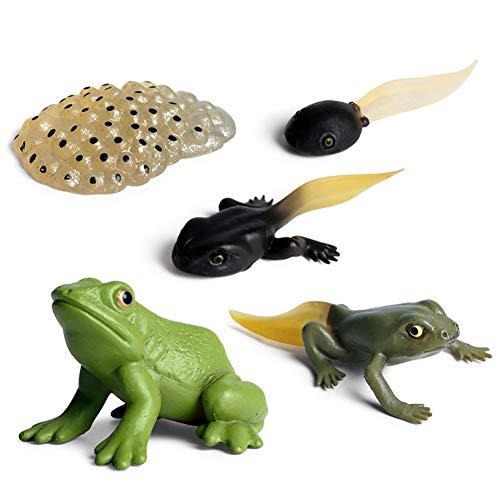 Juguete de figuras de animales de ciclo de vida, rana, crecimiento ciclo de vida, modelo para niños, estudiantes, biología, juguetes auxiliares pedagógicos, modelo de ciclo de crecimiento animal.