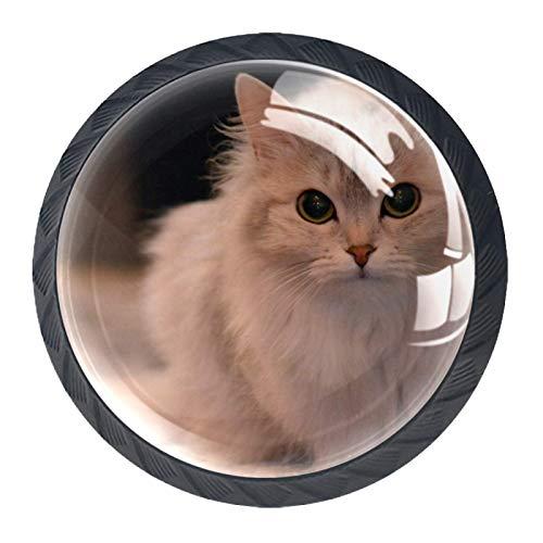 4 pomos para gabinetes de cocina con tornillos, tirador de cajón, pomos de gabinete, diámetro de diseño perfecto, cajones, aparador, armario, tiradores de gato