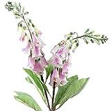 FiveSeasonStuff Artificial Flowers Foxglove (Digitalis Purpurea) Silk Flowers Décor (2 Stems) 29.1 inches (Subtle Pink)