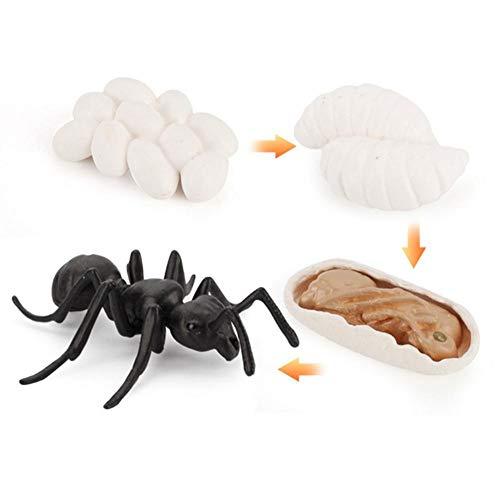 Tammy Yerke Jouet de Figurines d'animaux de Cycle de Vie, Cycle de Vie pour Grenouille, Fourmi, Moustique, Tortue de mer, Poulet, modèle de Cycle de Croissance Animale de Simulation
