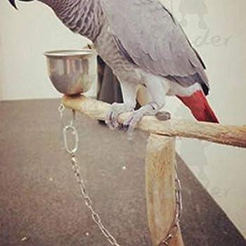 Perroquet Anneau De Pied en Acier Inoxydable Chaîne Activité D'ouverture pour Cockatiel Cacatoès Soleil Moine Perruche Oiseau Stand Cheville