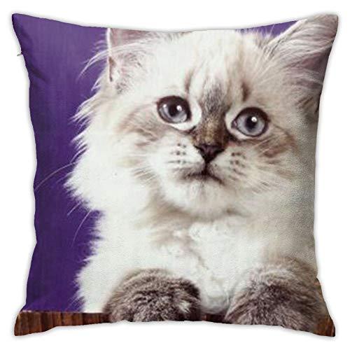 Cat (3) Funda de almohada cuadrada personalizada para sofá, dormitorio, oficina, 45,72 x 45,72 cm