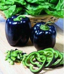 Rare organique Heirloom 5 Deep Purple poivre noir Graines de Bell Poivron F1 Semences Potagères Jardin Graines F66