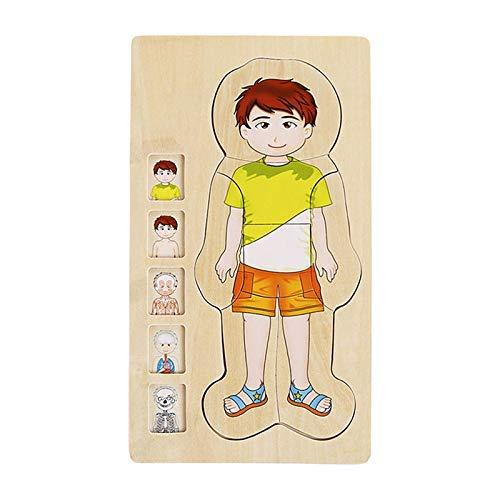 Lanceasy Madera Multi-Capas Puzzle Cuerpo Humano Estructura Puzzle Infantil Educativo Juguetes de Madera - Boy