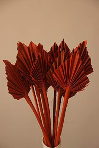 Palmspear Rot Orange Natur Dekorieren Trockenblume Gestecke Bodenvasen Floristik (12 St. Orange)