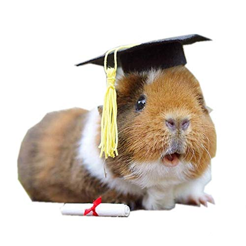 Small Animal Graduation Caps Mini Bachelor Hats With Bright Tassel Costume for Guinea Pigs,Hedgehog,Bird,Turtles,Hamster,Bearded Dragon,Rabbit,Ferret Photo Props Hat Holiday Costume Accessory (Yellow)