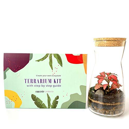 Kit de terrariums en verre transparent faits à la main Bouchon rond en liège Pour jardin Mousse de fittonia en pièce maîtresse Hauteur de 19 cm, Kit