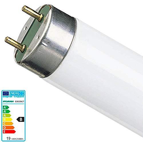 1x Sylvania 0000947 Lampe F 15W T8 G13 865 Daylight Tageslicht Leuchtstoffröhre 438 mm 26 mm Leuchtstofflampe Röhre F15W/T8/865 900 Lumen 6500k (Mü1215)