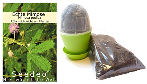 Seedeo Anzuchtset Echte Mimose (Mimosa pudica)