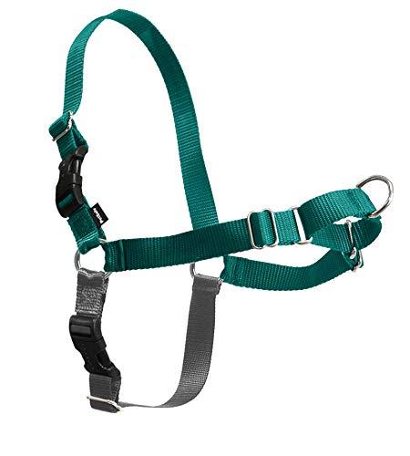 PetSafe Easy Walk Dog Harness, Teal, Medium