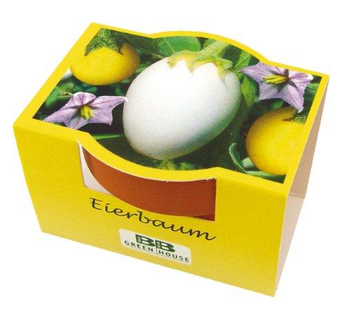 Minipflanzset Eierbaum