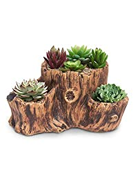 Tree Stump Planter for Woodland Baby Shower.