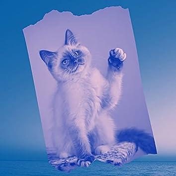 白い-かわいい猫