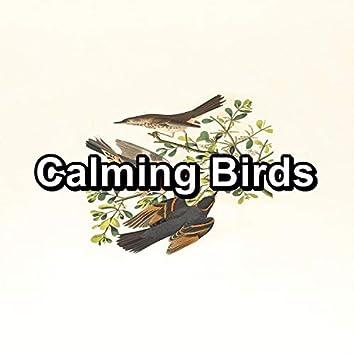 Calming Birds
