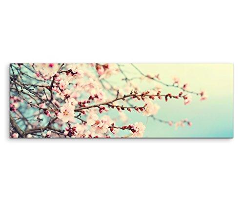Sinus Art Wandbild 120x40cm Naturfotografie – Rosa Kirschblüten auf Leinwand für Wohnzimmer, Büro, Schlafzimmer, Ferienwohnung u.v.m. Gestochen scharf in Top Qualität