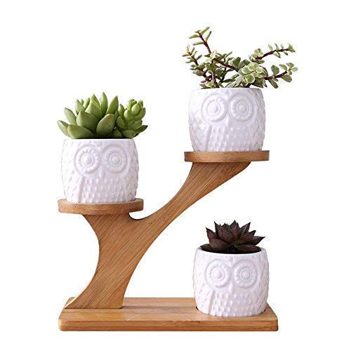 LINGLAN 1 juego búho de cerámica maceta de cerámica forma redonda / y bandeja de bambú / macetas de cactus / planta en macetas / Grow 1 paquete de 3