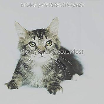 Gatos Sutil (Recuerdos)