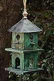 Alpine Backyard Birding