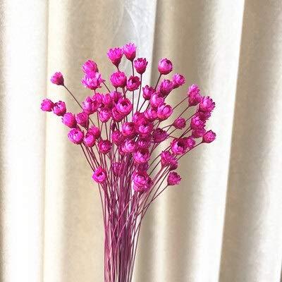 KONGZIR 30 / pcs dekorative Pflanzen erhalten Blumen for Hochzeit Hauptdekoration Blumen Mini Daisy Kleine Stern-Blumen Blumenstrauß Natur Getrocknete (Color : Red)