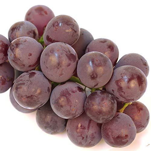 国華園 ぶどう 山形産 ピオーネ 約3kg ご家庭用 葡萄 ブドウ 果物