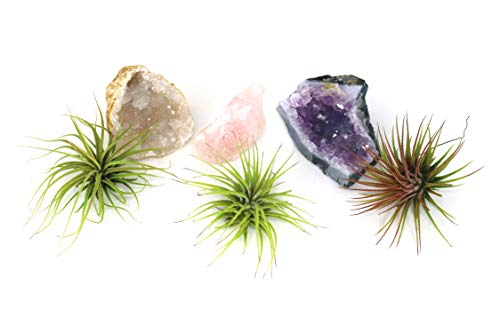 5-Pack Colorful Geodes with Air Plants Party Favors Gemstones for Wedding Favors and Gifts