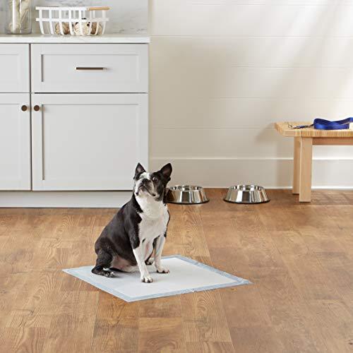 AmazonBasics Regular Pet Dog and Puppy Training Pads - Pack of 100
